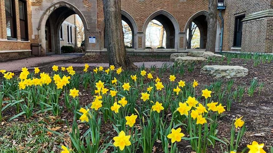 Daffodils and arches