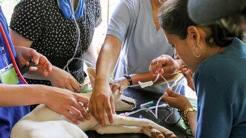 Pre-Veterinary Medicine | Augustana College